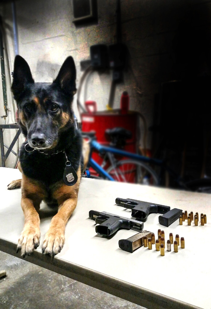 ESU K9 Timoshenko and the recovered illegal guns.