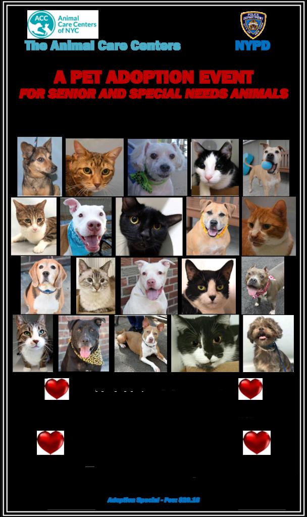 acc-adoption-day-poster-senior-10-16-pdf-2